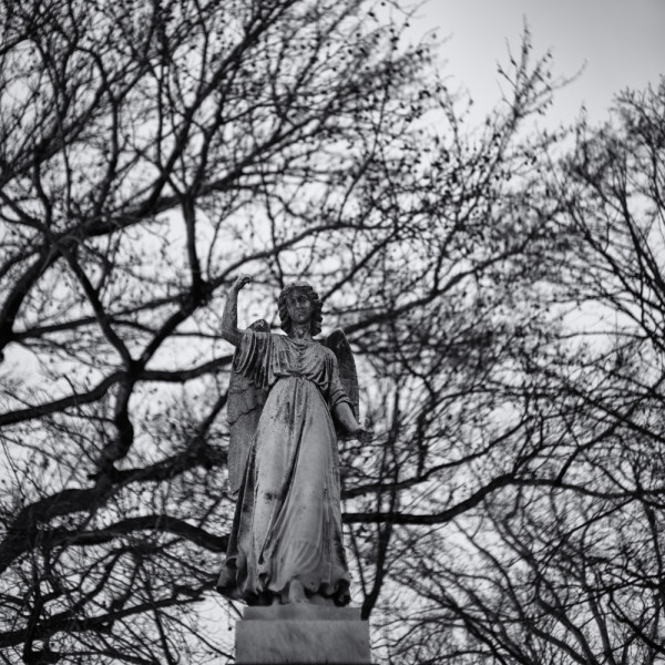 Angel in the trees ~ Sony A7s and Voigtlander 50 1.5 lens ~ 8s at f/1.5 and ISO 100