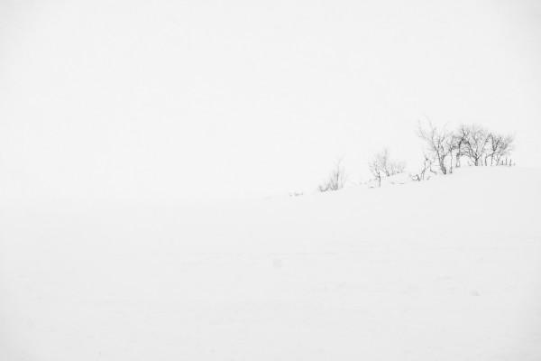 Snowstorm Study II ~ Fujifilm XT1 & 18-135 lens ~ 1/60s at f/9 ~ ISO 200