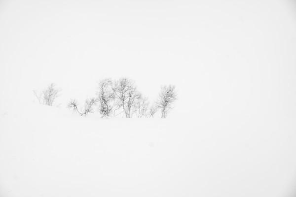 Snowstorm Study I ~ Fujifilm XT1 w/18-135 lens ~ 1/60s at f/9 ~ ISO 200
